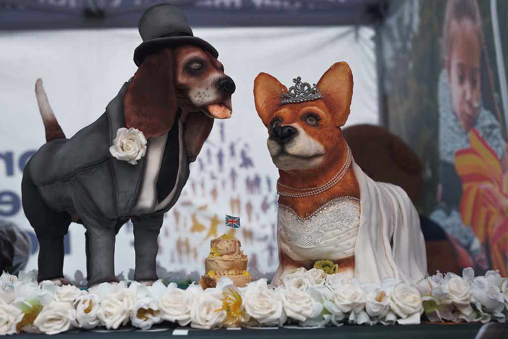 Charity PR stunt: Extreme cake maker Molly Robbins makes royal wedding dog cake for children's hospice charity