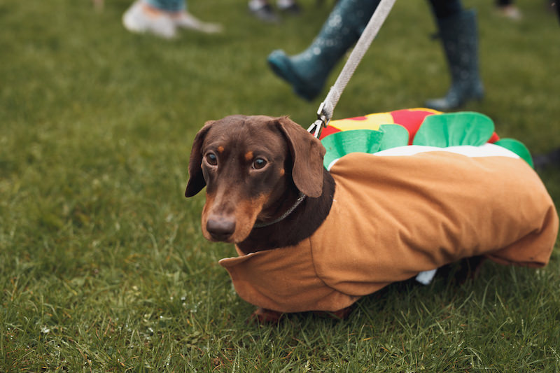 Fancy dress dog competition helped make a charity fundraising competition Instagrammable - Unhooked Communications, Public Relations in Manchester