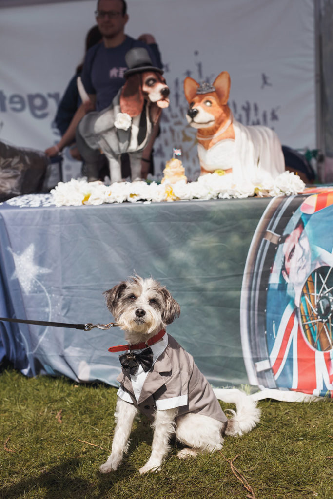 Charity PR stunt: Giant royal dog cake at charity PR event in Manchester