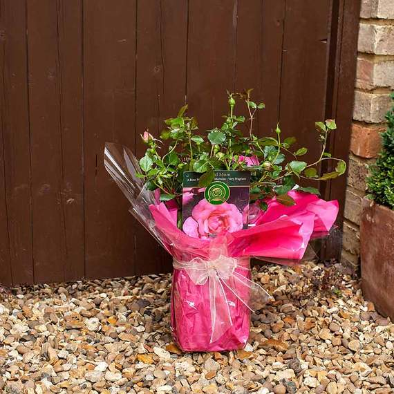 Home interiors PR agency - tree and flower gift retailer client
